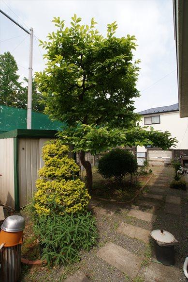 kawauchi20160514(25)_R.JPG